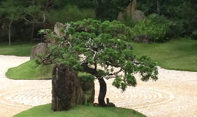 Yangsheng tree