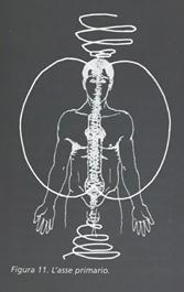 Biospirals