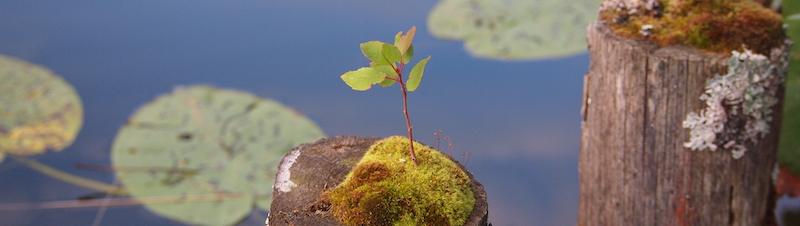 grow, tai chi